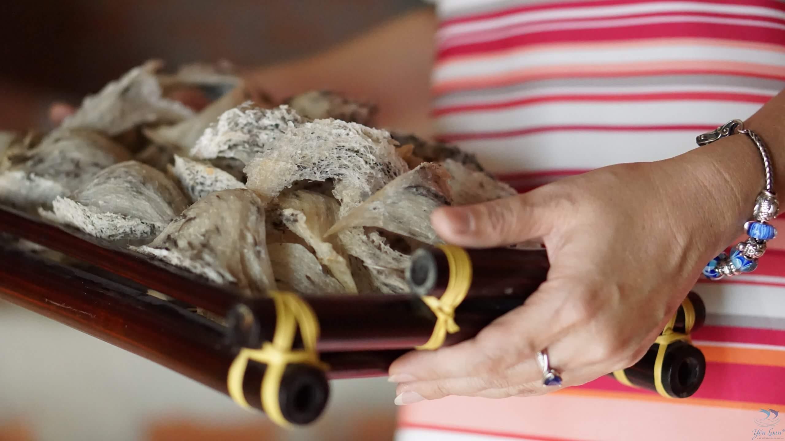 Quá trình hình thành và phát triển Yến sào Yến Loan made in Tây Ninh