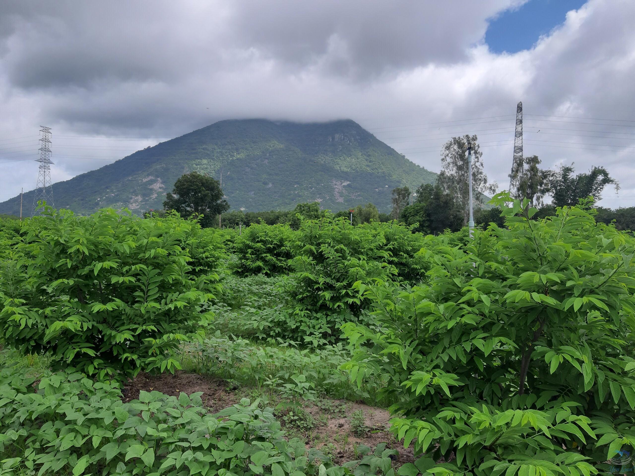 Yến sào Núi Bà Đen Tây Ninh – Tinh hoa thiên nhiên
